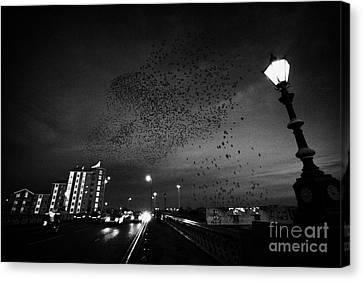 Flock Of Starlings Flying In Murmuration Over Lamp On Albert Bridge Belfast Northern Ireland Uk Canvas Print by Joe Fox