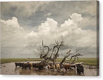 Flooded Pastures Canvas Print by Chris Harris