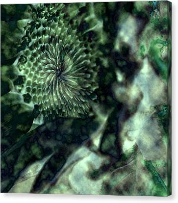 Floral Abstract I Canvas Print by Bonnie Bruno