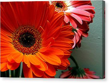 Clayton Canvas Print - Floral Art by Clayton Bruster