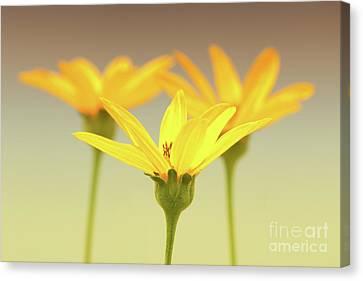 Floral Brilliance Canvas Print