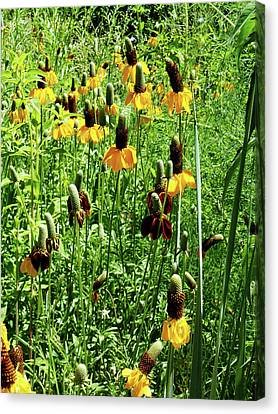 Floral Canvas Print by Cynthia Powell