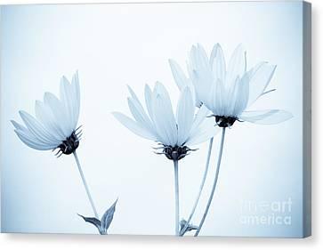 Floral Elegance Canvas Print by Anita Oakley