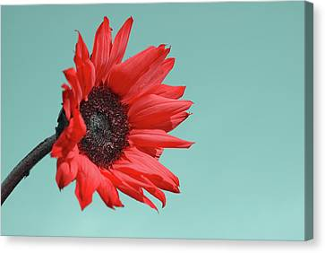 Floral Energy Canvas Print