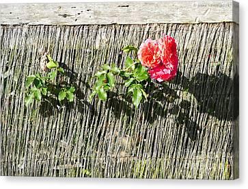 Floral Escape Canvas Print by Ivana Westin