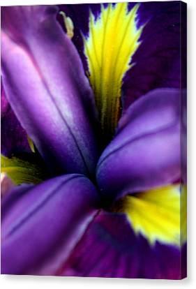 Floral Explosion Canvas Print by Alexandra Harrell