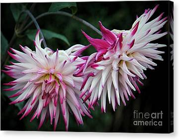 Floral Explosion Canvas Print by Patricia Strand
