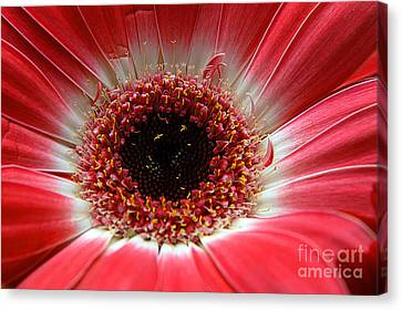 Floral Eye Canvas Print by Clayton Bruster