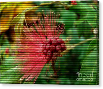 Canvas Print featuring the photograph Floral Fan by Sue Melvin