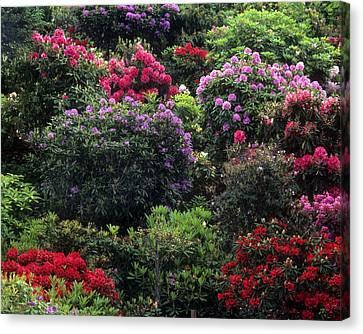 Floral Garden-32 Canvas Print