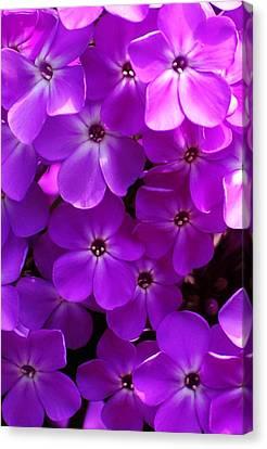 Floral Glory Canvas Print by David Lane