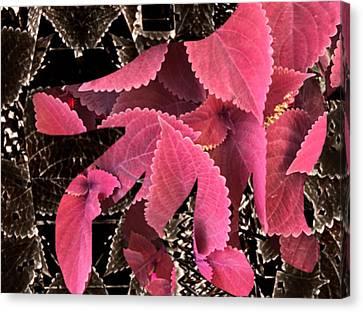 Floral Lotion Canvas Print