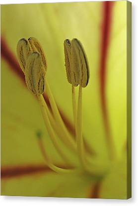 Floral Office Gossip Canvas Print by Juergen Roth