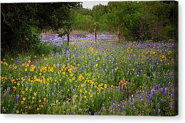 Floral Pasture No. 2 Canvas Print by Jon Holiday