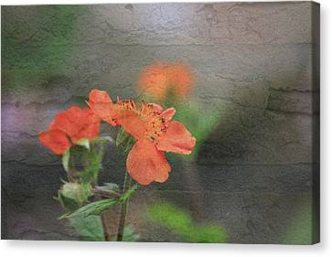 Floral Photo Of Orange Spring Flower And Texture Canvas Print