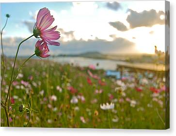 Floral Sunset Canvas Print by Yen