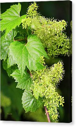 Grape Vines Canvas Print - Floral With Green Leaves by Christina Rollo