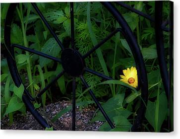 Floral Yellow Peek A Boo Canvas Print by Thomas Woolworth