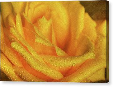 Canvas Print featuring the photograph Floral Yellow Rose Blossom by Shelley Neff