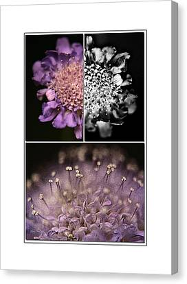Floralicious  Canvas Print by Bonnie Bruno