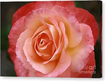 Florange Canvas Print by Stephen Mitchell