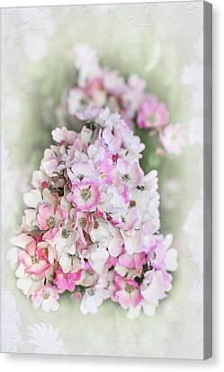 Florence Canvas Print by Elaine Teague