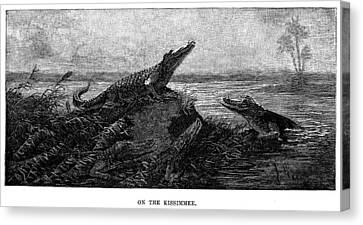 Florida Alligators, 1886 Canvas Print by Granger