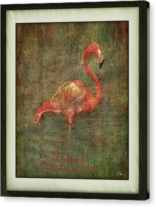 Canvas Print featuring the photograph Florida Art by Hanny Heim