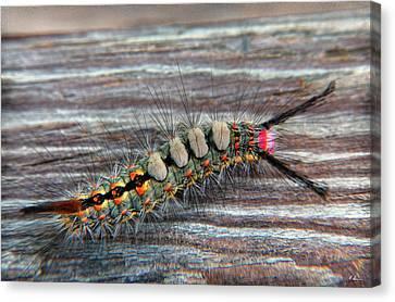 Florida Caterpillar Canvas Print