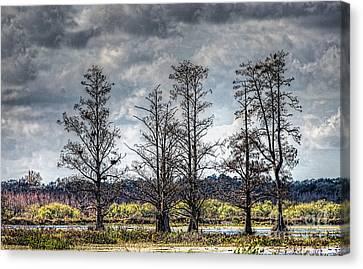 Florida Cypress Canvas Print by Felix Lai