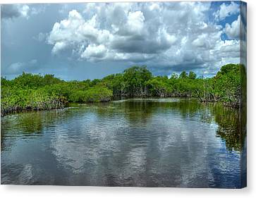 Florida Everglades Canvas Print