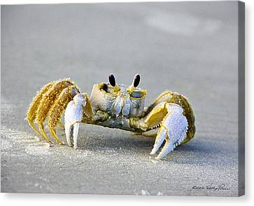 Florida Ghost Crab Canvas Print