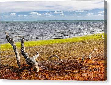 Tree Roots Canvas Print - Florida Keys Colors by Elena Elisseeva