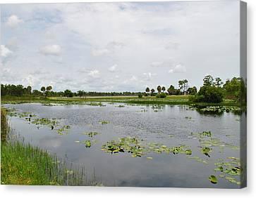 Florida Landscape Canvas Print by Steven Scott