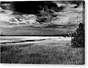 Florida Marsh Canvas Print by Marcus Adkins