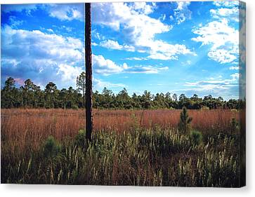 Florida Nature Canvas Print by Michael Frizzell
