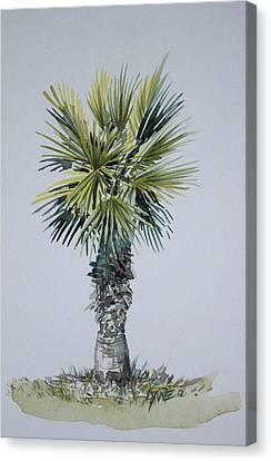 Florida Palm Botanical Canvas Print