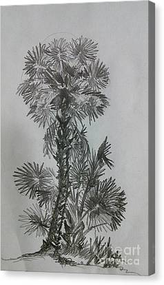 Florida Canvas Print by Peter C Lavin