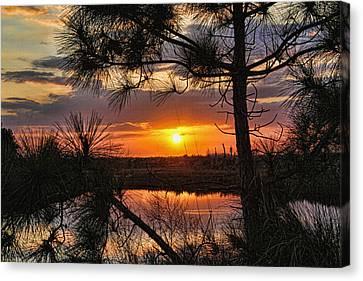 Florida Pine Sunset Canvas Print