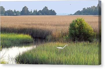 Canvas Print featuring the photograph Florida Saltmarsh by Peg Urban