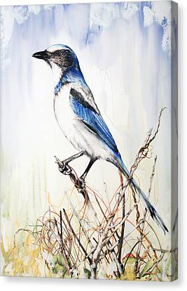 Canvas Print featuring the mixed media Florida Scrub Jay by Anthony Burks Sr