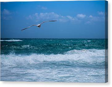 Canvas Print featuring the photograph Florida Seagull In Flight by Jason Moynihan