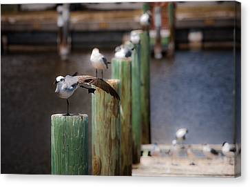 Canvas Print featuring the photograph Florida Seagull Playing by Jason Moynihan