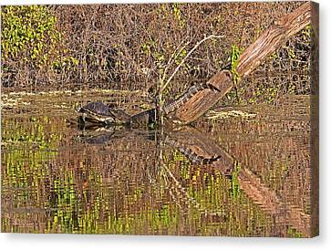 Friends Forever Canvas Print - Florida Siesta  by Juergen Roth