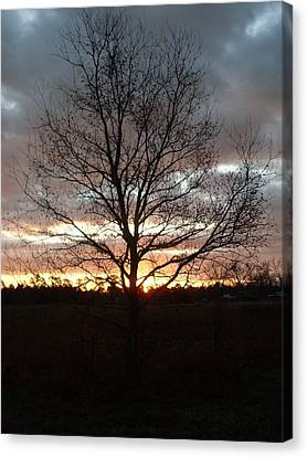 Florida Sunrise And Tree Canvas Print by Warren Thompson