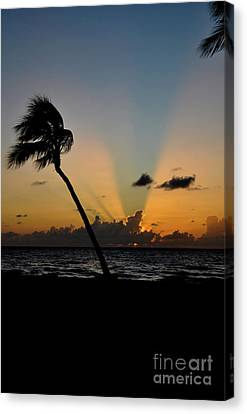 Canvas Print featuring the photograph Florida Sunrise Palm by Kelly Wade