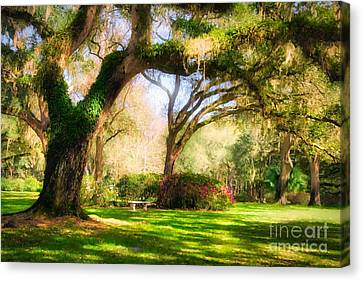Florida Sunshine Canvas Print by Mel Steinhauer