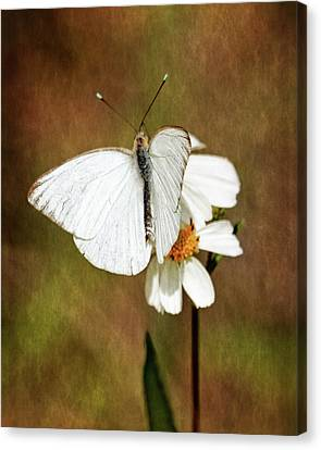 Canvas Print featuring the photograph Florida White by Dawn Currie