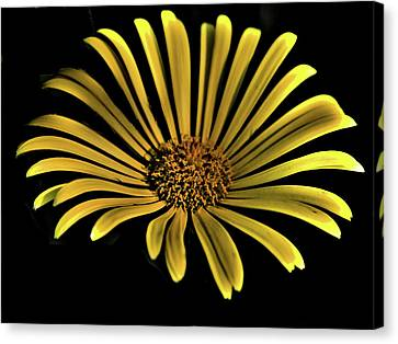 Flower 1 Canvas Print by Lawrence Christopher