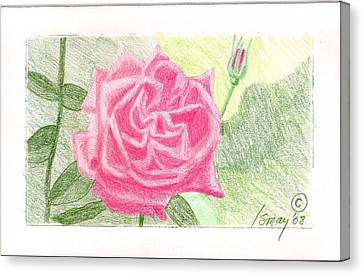 Flower 2 - The Confused Rose Canvas Print by Rod Ismay